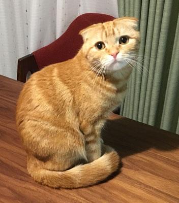 ペットシッター 横浜