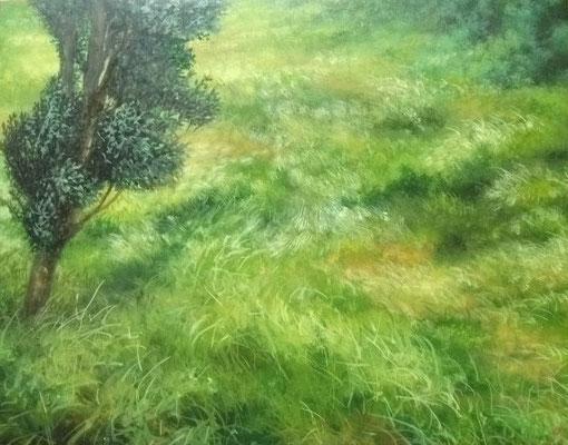 grassland  F6号