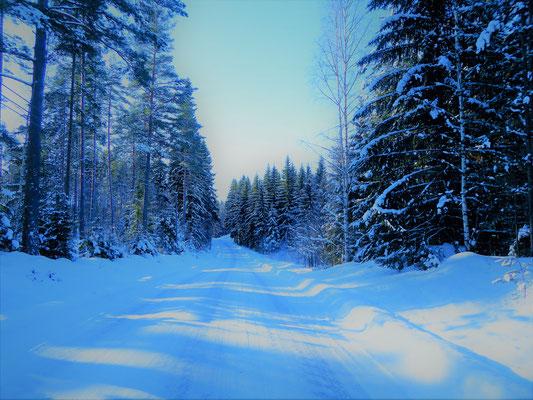 . . . z.B. bei Wanderungen direkt durch die Wälder am Haus oder zunächst mit dem Auto in die näheren und weiteren waldreichen Umgebung Sysmäs.