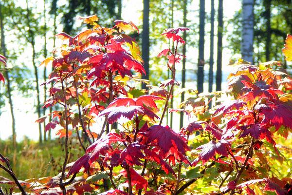 Willkommen, zu Ihrer Auszeit im Herbst!