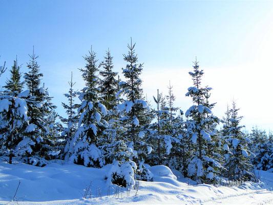 ... durch tiefverschneite Wälder ...