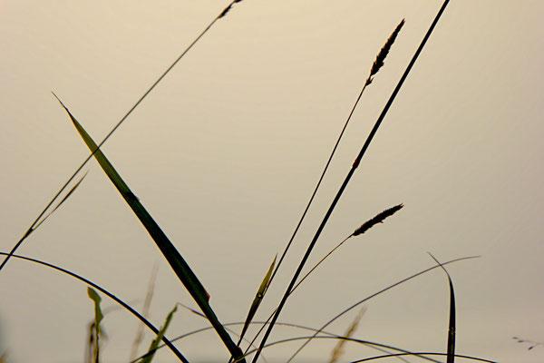 Details in der Natur entdecken und neu erleben. Das Auge schweifen und die Seele baumeln lassen.