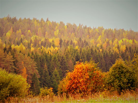... bis wir dann erste Wälder mit Laub- ...