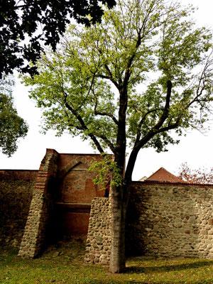 Wiekhausgrundmauer welche nicht rekonstruiert wurde