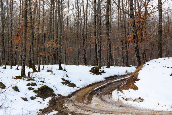 Longoz Ormanı - İğneada