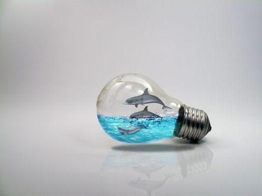 Dolphin Bulb