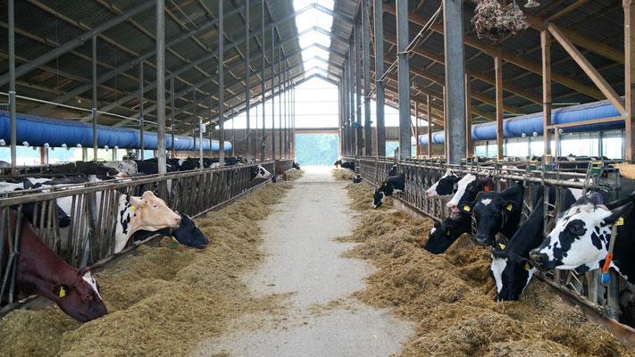 Milchviehlaufstall - Hof Schmidt Geel