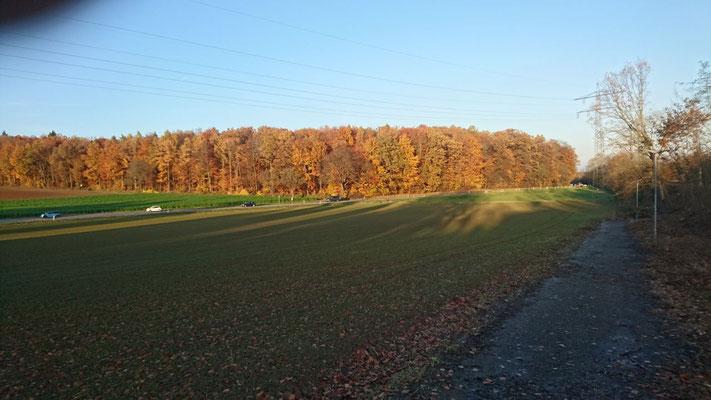 """Waldeck """"Diedelsheimer Wald"""" an der B293 (14/11/2017 M.Kiefer)"""