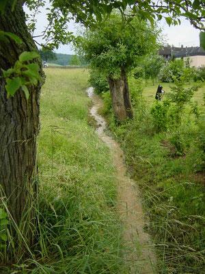 """""""Hochwasser"""" 2008"""
