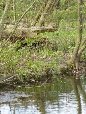 Ein Krokodil am Teich gestaltet von Klaus Eißler