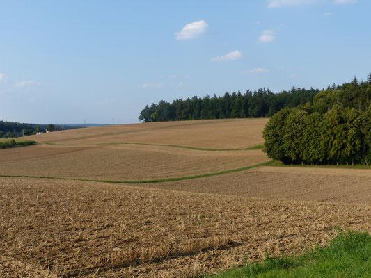 Blick von der Schutzhütte zur Gemarkungsgrenze Rinklingen - Waldrand Reutrain