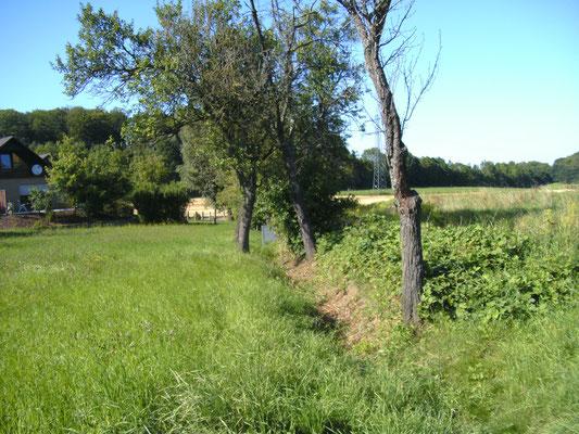 Dorfgraben  2009