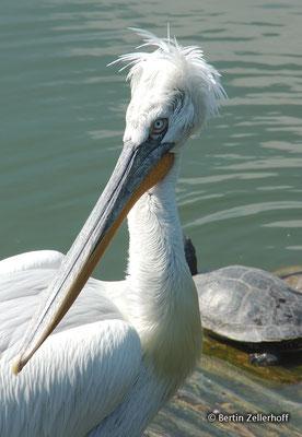 Deutschland, NRW, Münster, Allwetter-Zoo