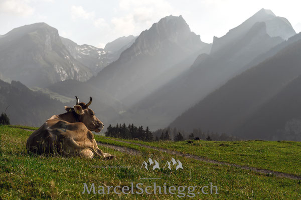 Sämtisersee/Alp Soll Art.-Nr. MZ7-1098-Juli/2019