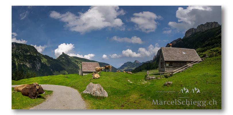 Bollenwees/Fählensee Art.-Nr. MS8-4624-Pan-August