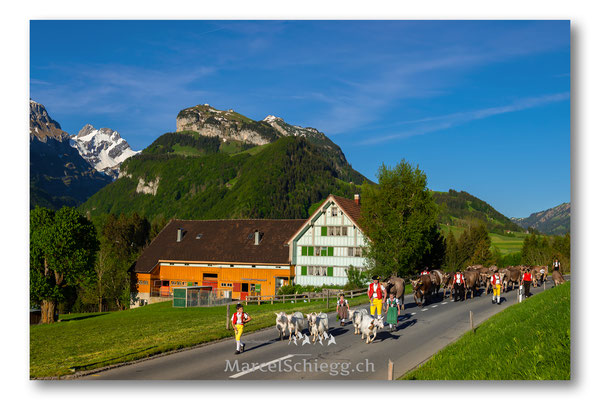 Appenzellerland/Öberefahre/Alpfahrt Art.-Nr. MS8-2244-Juni/19