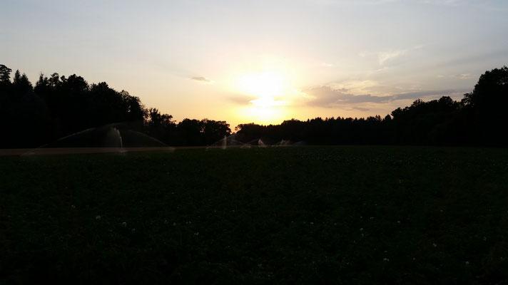 Kartoffelbewässerung Sommer 2015