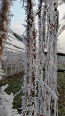 Himbeeranlage Winter 2017