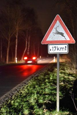 Runter vom Gas in der Dämmerung, bei Nacht und bei Nebel: Schon durch eine reduzierte Geschwindigkeit können Zusammenstöße mit Wild vermieden werden. Quelle: Kapuhs/DJV