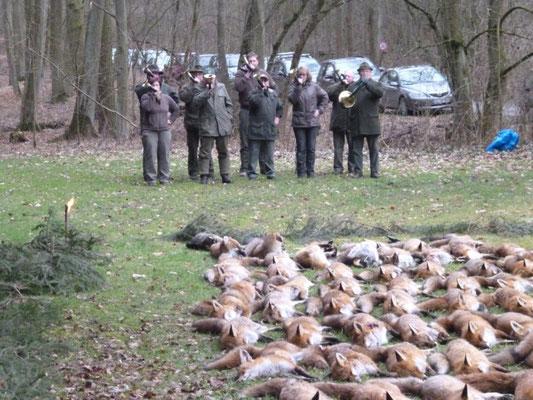 Fuchswoche beim Jagdverein Hubertus