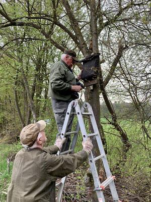 Anbringen des Fledermauskastens