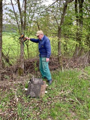 Auswahl eines geeigneten Baumes zum Anbringen des Fledermauskastens