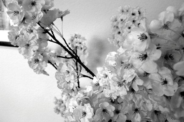 Kirschblüten im Behandlungsraum, www.osteopathie-lehrmann.de