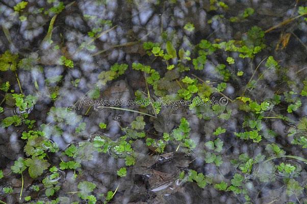 Was so alles unter der Wasseroberfläche wächst