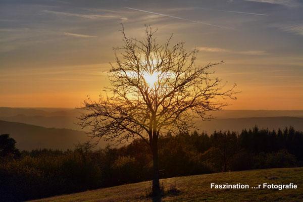 Steinerberg: Natur pur