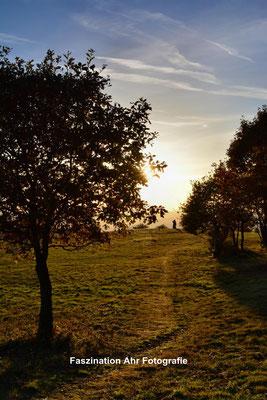 Steinerberg: Der Abendsonne entgegen