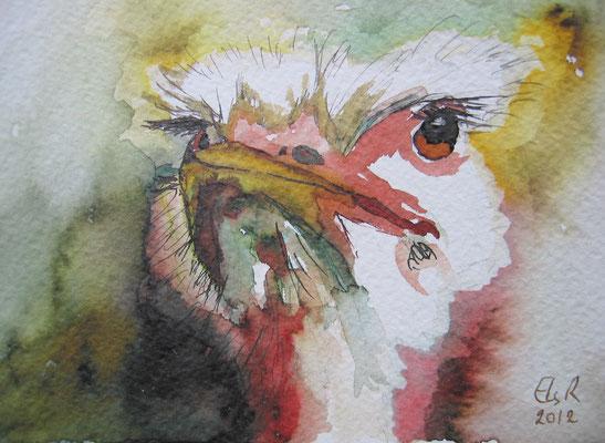 Struisvogelkop; 21x18 cm incl. lijst (papier)