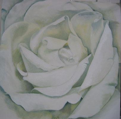 Witte Roos: 50x50 cm (linnen)