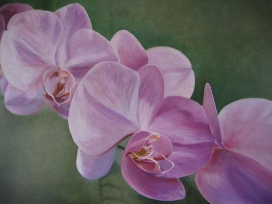 Lila Orchidee; 80x60 cm (linnen)
