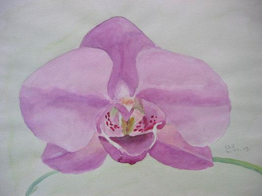 Lila Orchidee; 50x40 cm incl.lijst (papier)