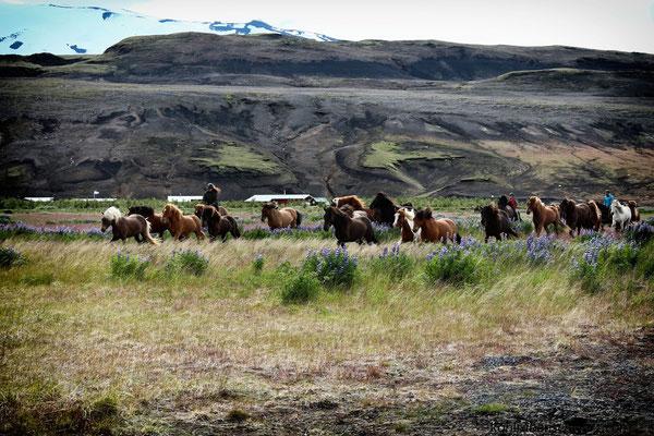 bei Burfellsskogur am Hekla