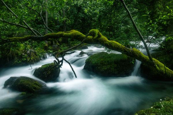 in den Wäldern um den Gollinger Wasserfall