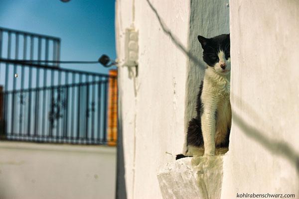 Katze in Competa