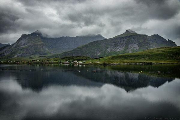 norwegische Rauheit