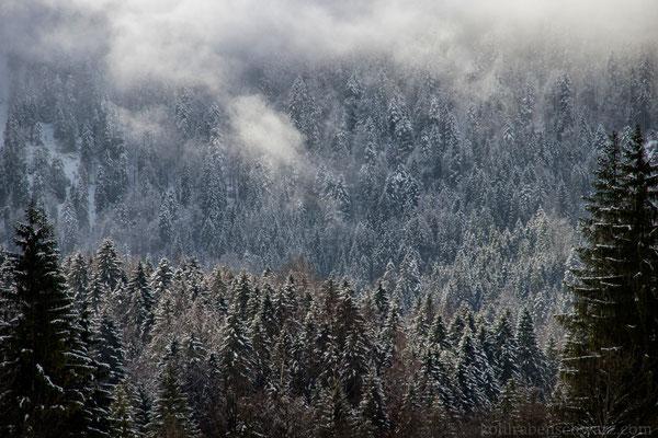 verschneite Wälder