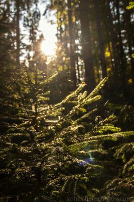 Die Wälder bei Tonndorf