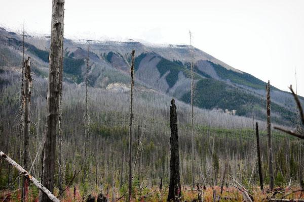 im Waldbrandgebiet Kootenay Nationalpark