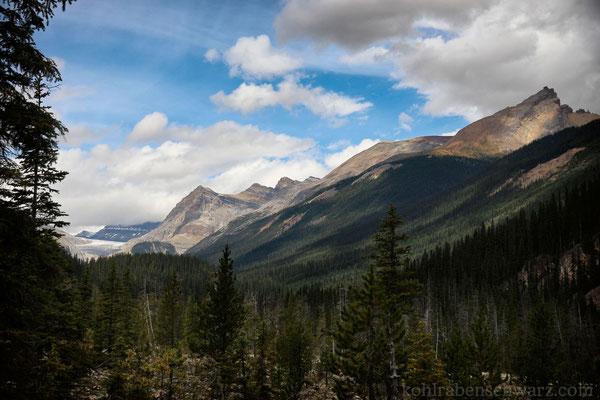 in den kanadischen Wäldern