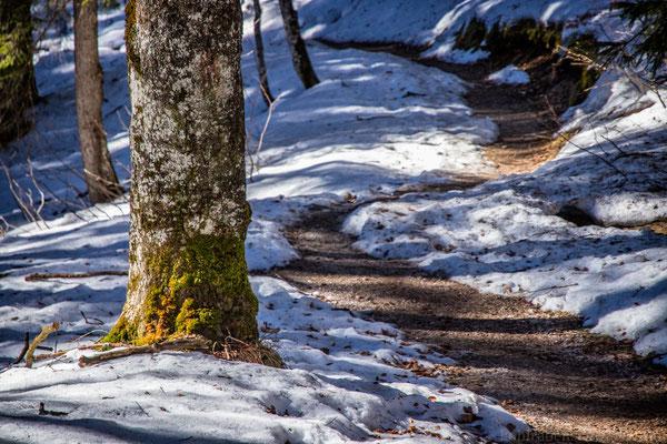 auf Pfaden durch den Wald