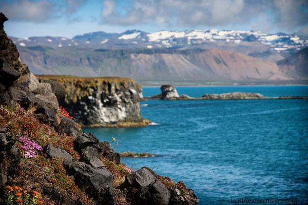 Basaltküste zwischen Arnarstapi und Hellnar