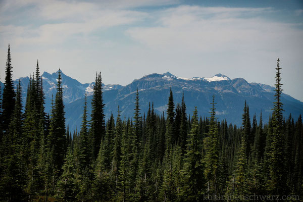 im Mt. Revelstoke Nationalpark