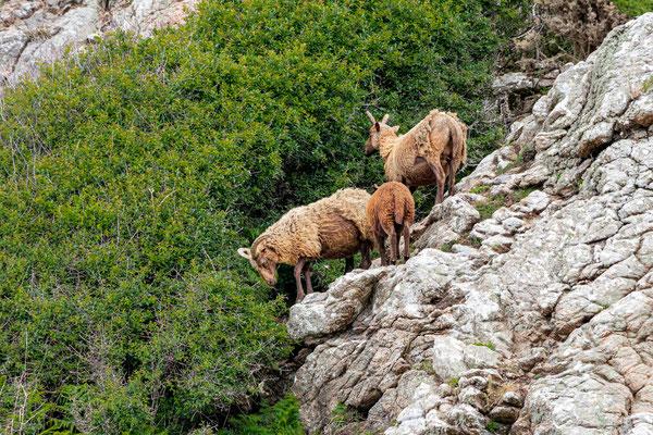 Auf der kurzen Wanderung zum Devil's Hole ist viel von Flora und Fauna zu sehen.
