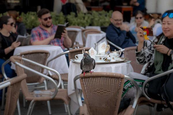 Besuch einer Taube