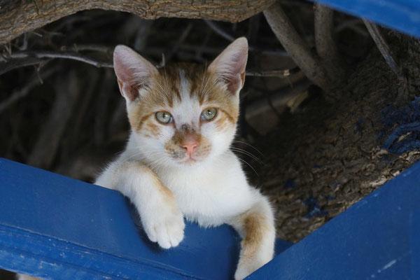 Katze auf Mykonos