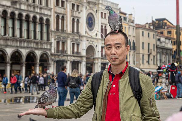 Füttern verboten! Tauben am Markusplatz.