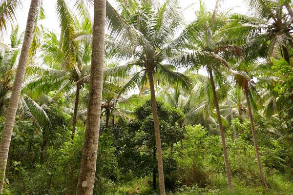 Dschungel - Togian Islands - Sulawesi - Reisetipps - travelumdiewelt.de
